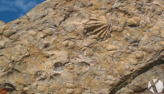 انقراضهای بزرگ، تا کنون چند بار زندگی به پایان رسیده است